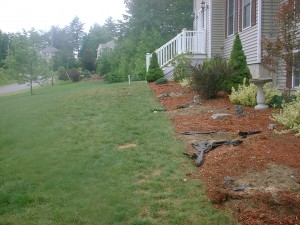 BEFORE: Messy Bed, No walkway, lawn in poor condition