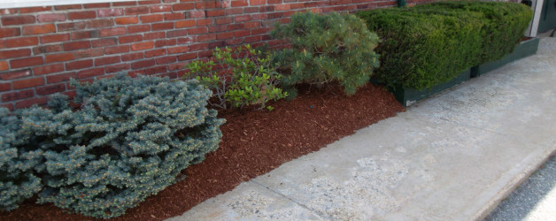 Spring Clean Up and Mulch job in Salem, NH